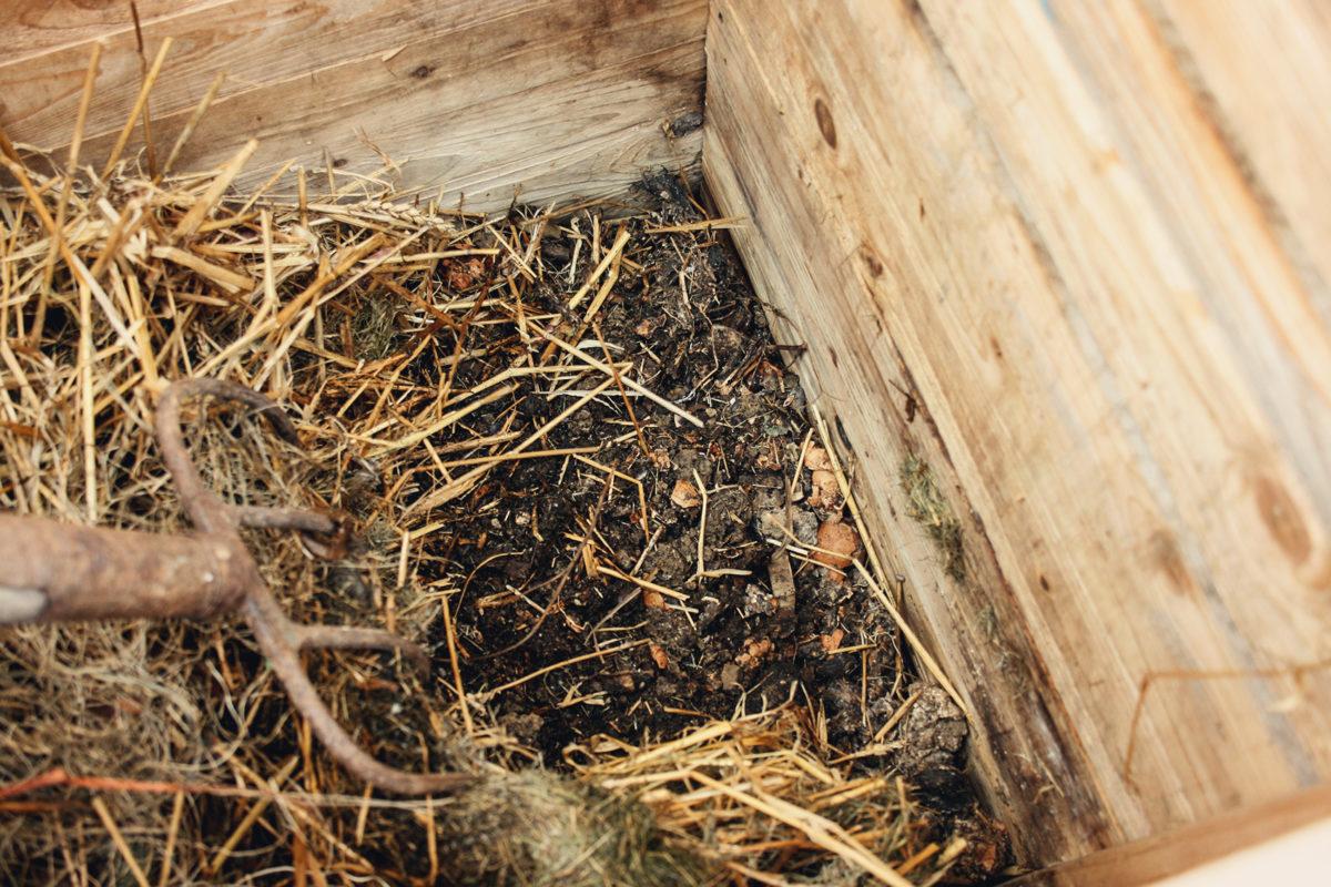 Compost noir jardin zéro déchet